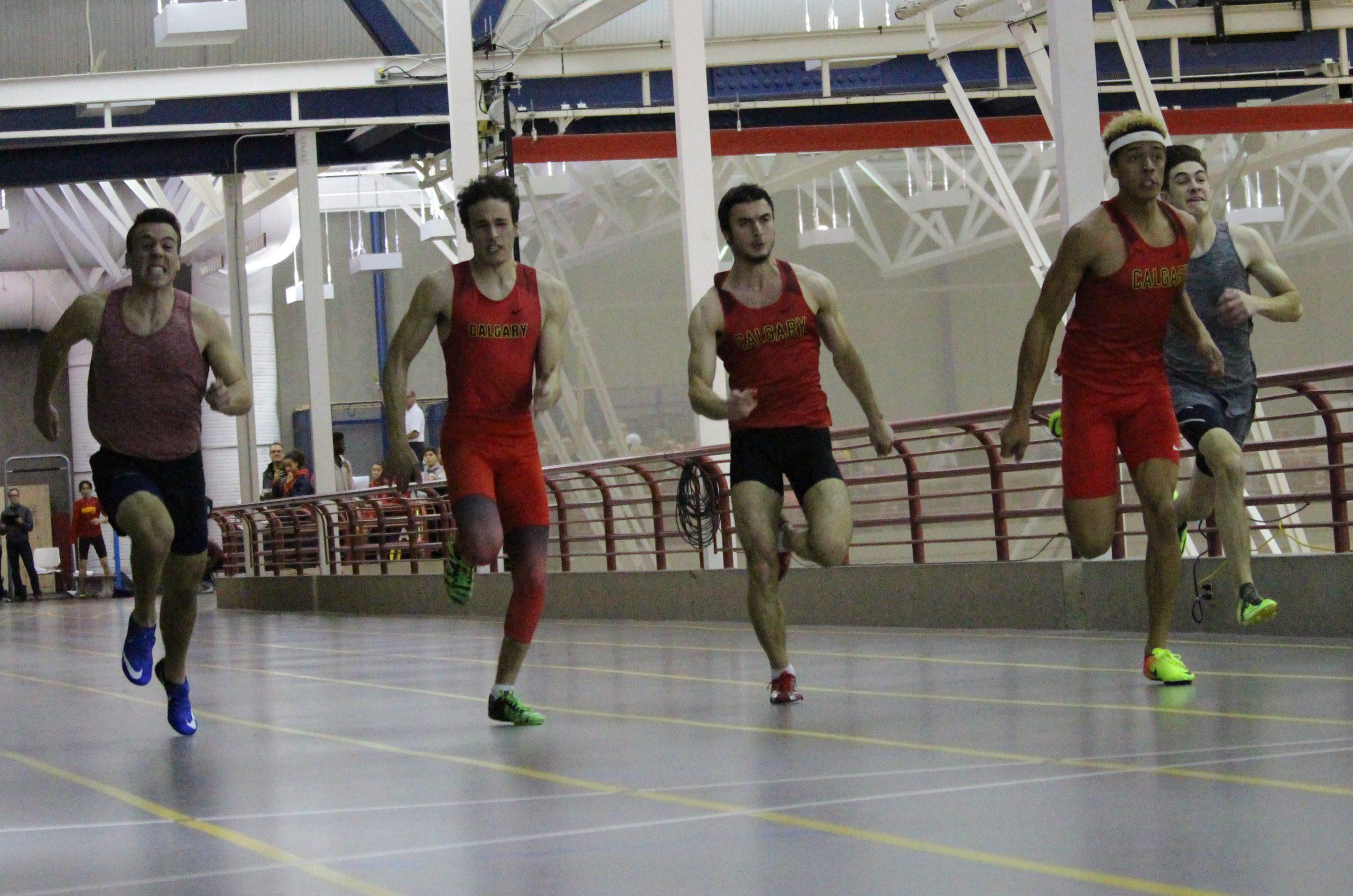 Dino Indoor Series